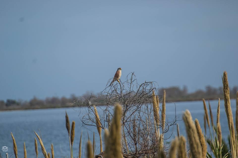 بالصور..  شاهد طيور بحيرة مارتشيكا في المغرب