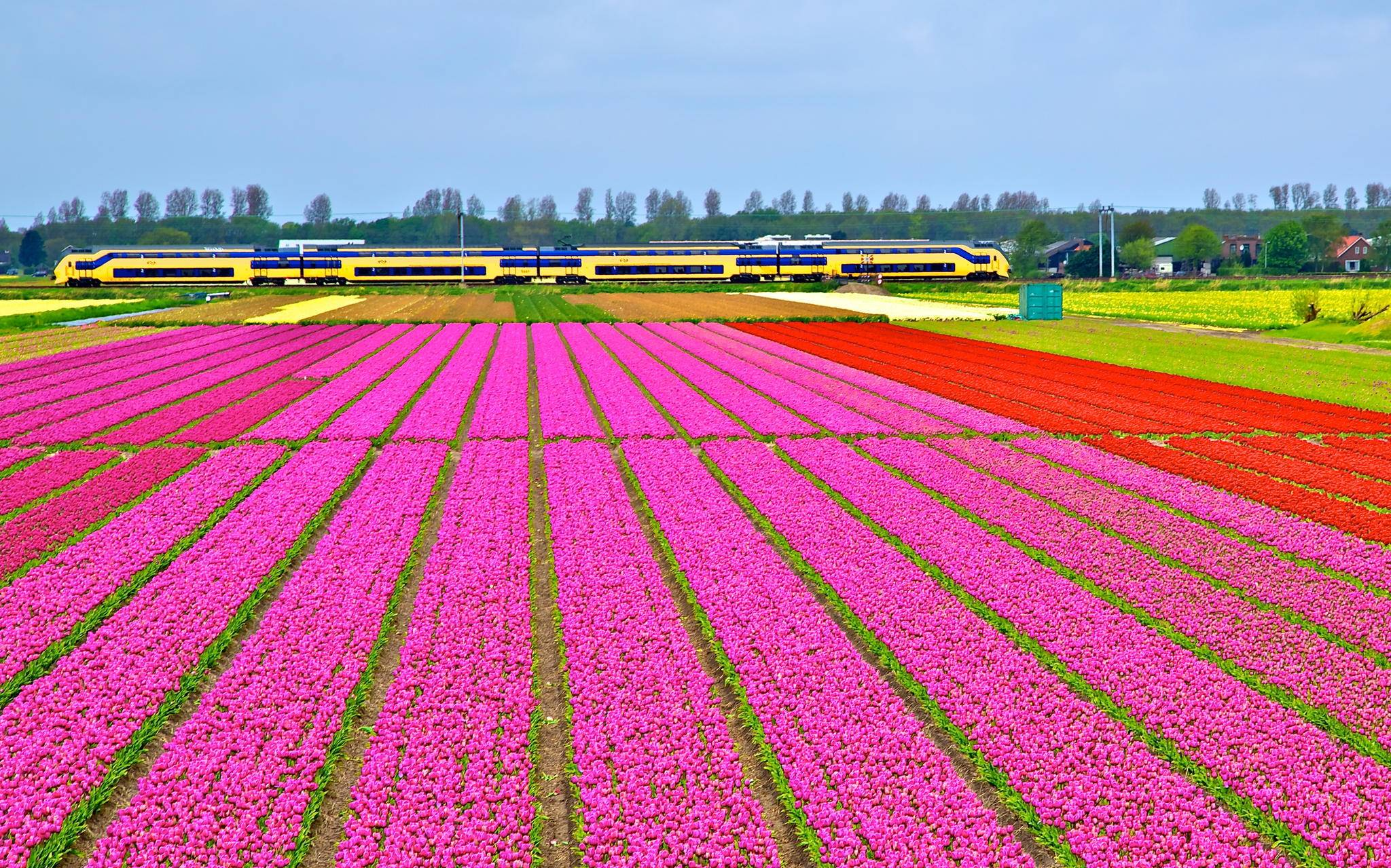 Image Result For Flower Card Amsterdam