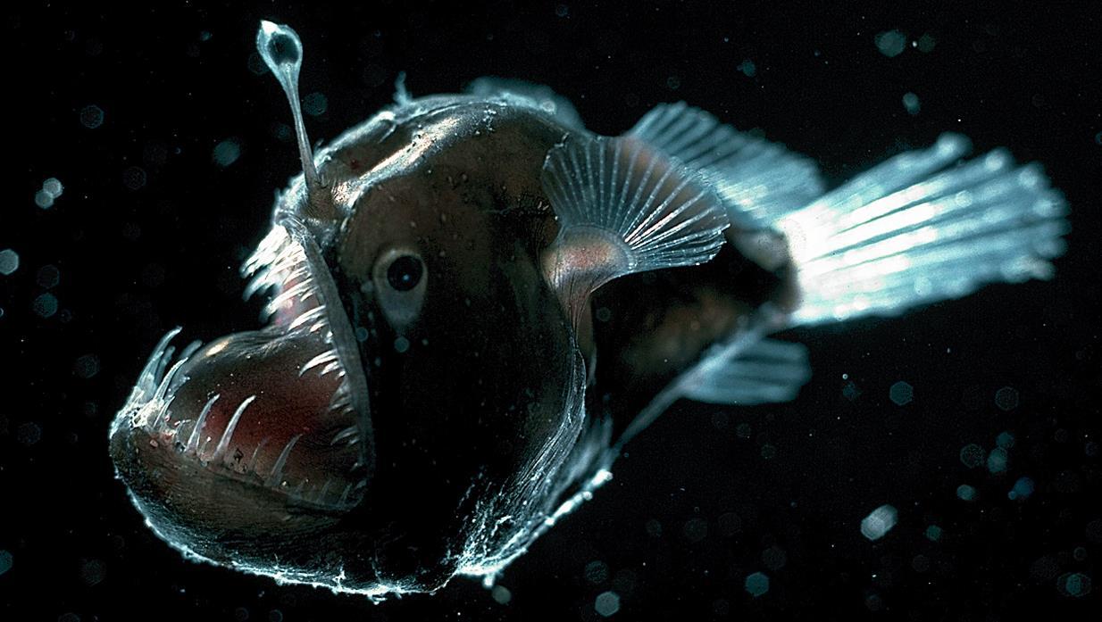 سمك أبو الشص