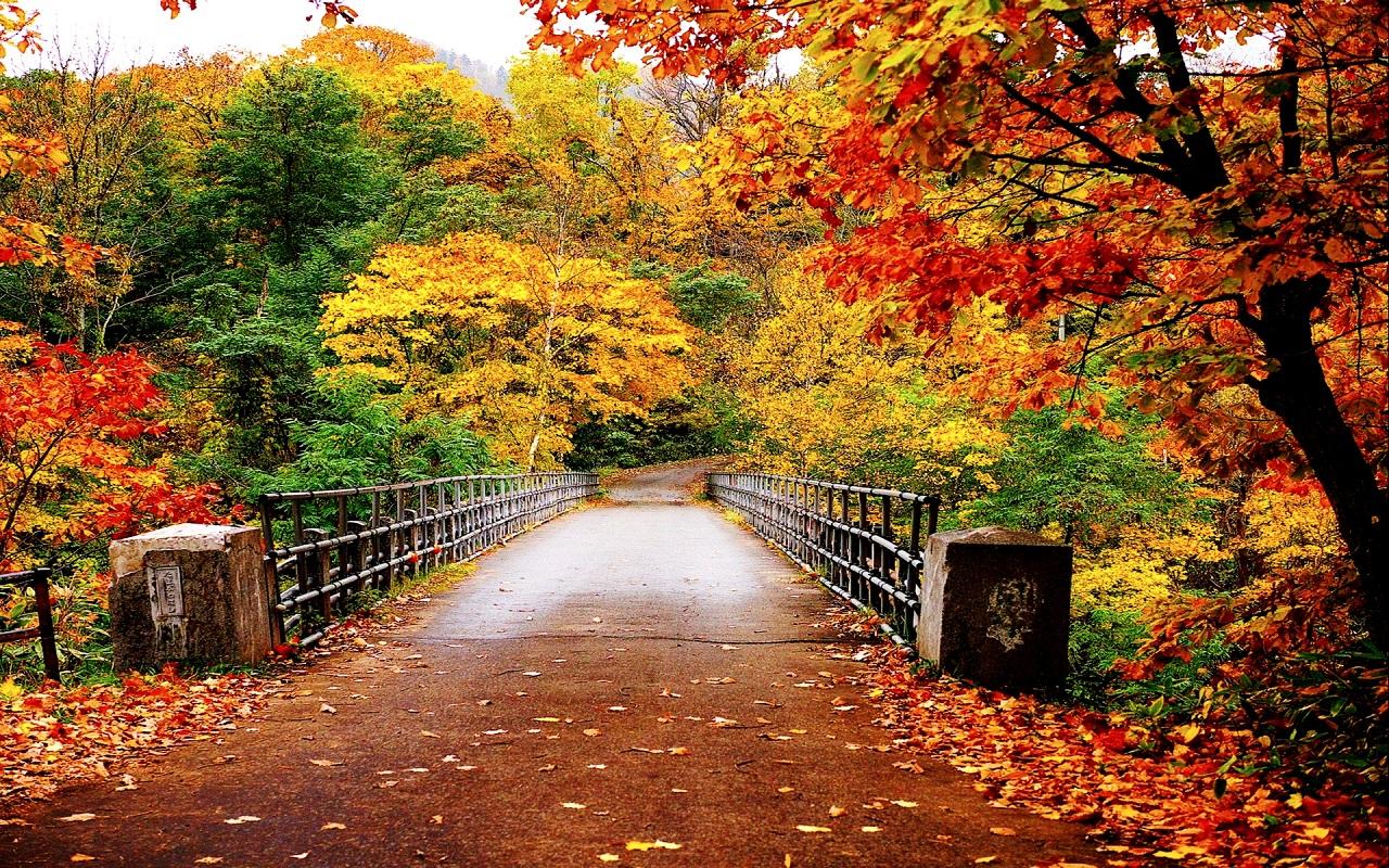 Fall Wallpaper For Desktop Download Free Full Hd: لماذا يتغير لون أوراق النباتات الي اللون الأصفر في فصل