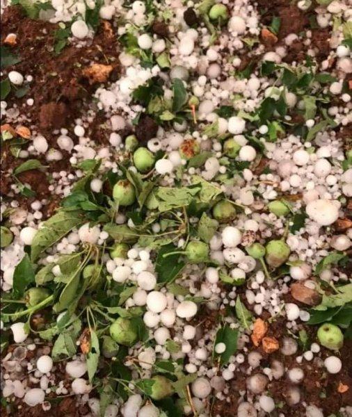 تلف المحاصيل الزراعية في لبنان بسبب الطقس