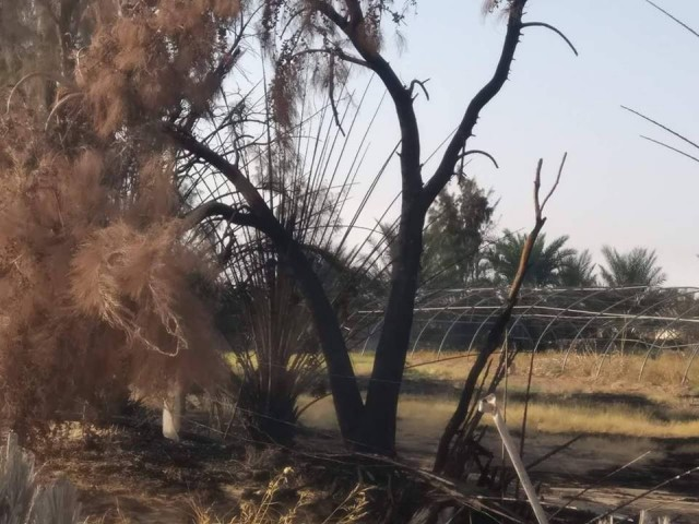 وزارة الصحة تحذر من موجة الحر