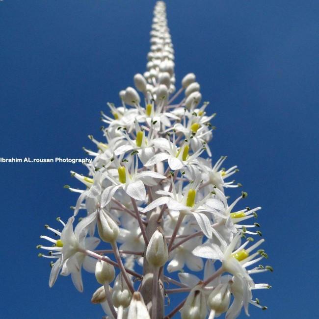 Zainab Alashour👑